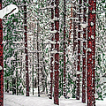 Winters Forest by Optical Playground By MP Ray