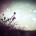 Winter's Magic by Natasha Marco