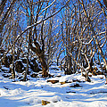 Winter's Tale  by Stefan Dinov