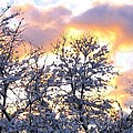 Wintry Sunset by Will Borden