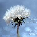 Wish by Krissy Katsimbras