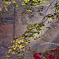 Wissahickon Autumn by Bill Cannon