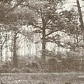 Woodland by Brett Pfister