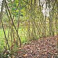 Woodland Path by Tom Gowanlock