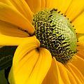Yellow Daisy by Irene  Theriau