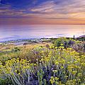 Yellow Flowers At The Sea by Guido Montanes Castillo