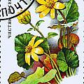 Yellow Lesser Celandine Ranunculus Ficaria by Jim Pruitt
