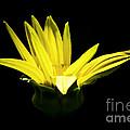 Yellow by Ronald Grogan