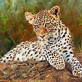 Young Leopard by David Stribbling