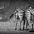 Zebra by Amanda Stadther