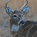 8 Point Buck by Ken Keener