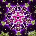 Flower Kaleidoscope Resembling A Mandala by Stephan Pietzko