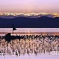 Mono Lake California by Jason O Watson