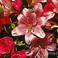 Rose Parade  by Howard Stapleton
