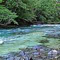 Salmon Creek by Tim Rice