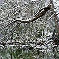Winter Along Williams River by Thomas R Fletcher