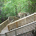 1000 Steps by Aimee L Maher ALM GALLERY