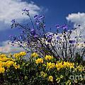 Flower by Gyorgy Nagy