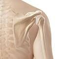 Human Shoulder by Sebastian Kaulitzki