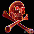Skull And Crossbones by Science Picture Co