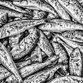 Tile Of Fishes by Dobromir Dobrinov