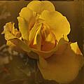 Vintage Yellow Rose by Richard Cummings