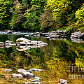 Williams River Autumn by Thomas R Fletcher
