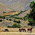 112 by Wynema Ranch