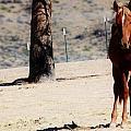 113 by Wynema Ranch