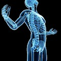 Human Skeletal System by Sebastian Kaulitzki