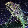 Abstract Cayman Iguana by Dave Byrne