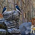 Birds by Marc Bittan