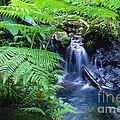 El Yunque National Forest by Thomas R Fletcher