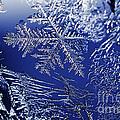 Frost On A Windowpane by Thomas R Fletcher