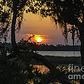Lowcountry Spanish Moss Sunset by Dale Powell