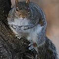 Squirrel by Ken Keener