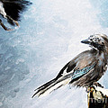 The Wintery Tales by Angel Ciesniarska
