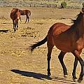 121 by Wynema Ranch