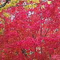 Autumn Color by Kenny Glover