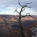 Grand Canyon by Karen Cowled