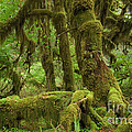 Olympic National Park by John Shaw
