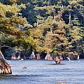 Reelfoot Lake by Bonnie Willis