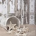 13 Starfish Lane by Chrystyne Novack