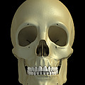 The Skull by Science Picture Co