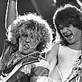 Van Halen - Sammy Hagar With Eddie Van Halen by Concert Photos