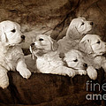 Vintage Festive Puppies by Angel Ciesniarska