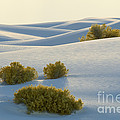 White Sands by John Shaw