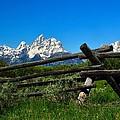 Teton Mountains by Walt Sterneman