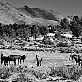 131 by Wynema Ranch
