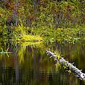 131005b-052 Forest Marsh 2 by Albert Seger